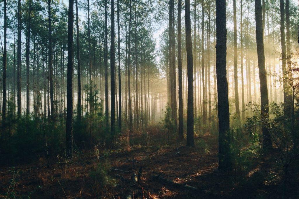 【ゴルフ初心者必見】無理せず確実に林から1発で脱出する方法とは!?